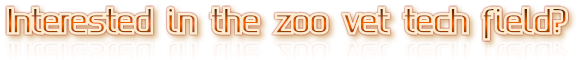 Interested in the zoo vet tech field?